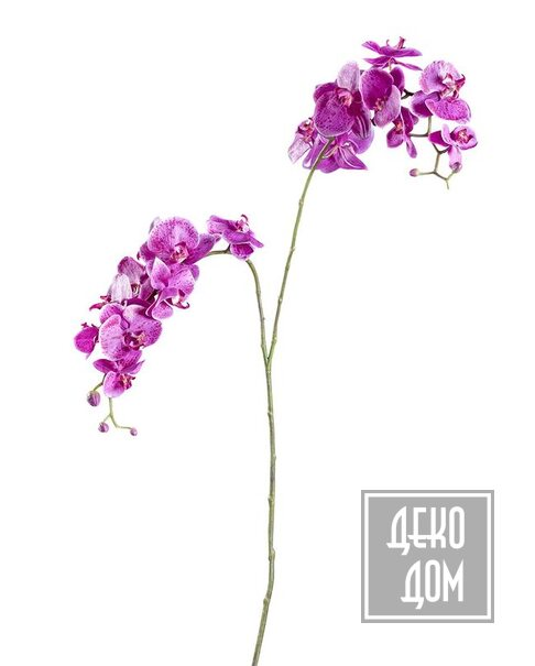 ABHIKA | Декор Orchid Phalenopsis X2 H135cm (арт.210046-59) фото | ✆ +38(067)3-999-700 | Цена в Украине | Оригинальный декор для дома |